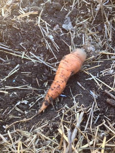 growing vegetable during winter