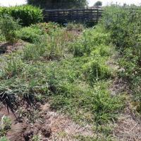 June Garden Update