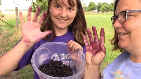 Picking berries.jpg